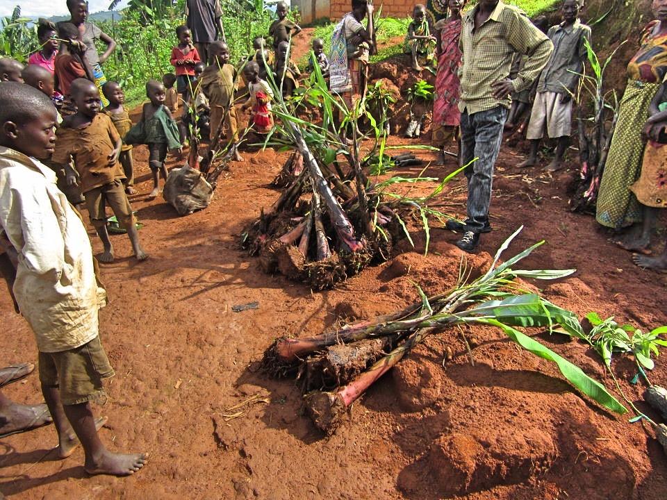 Anbau von Obstbäumen – Video aus Burundi